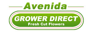Calgary Flower Delivery Logo