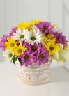 Lavender, white, and yellow daisies