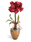 The FTD® Magnificent™ Amaryllis Plant