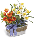 The FTD® Joyful Spring™ Planter