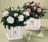 The FTD® Baby Princess Rose Planter