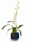 The FTD® Irresistible Orchid™ Planter
