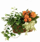 The FTD® Kalanchoe & Ivy Planter