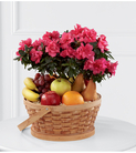 The FTD® Encircling Grace™ Fruit & Plant Basket