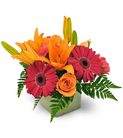 Gerbera Daisies, Lilies, and Carnations