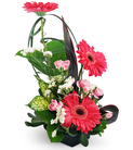 Gerbera Daisies and Mini Carnations