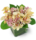 Mini Cymbidium Orchids and Waxflowers