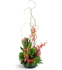 Protea, Orchids, and Curly Willow