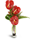 Ornamental Anthurium™