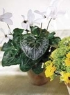 The FTD® Green Gardens™ Centerpiece